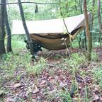 Wald bei Langeleben