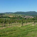 Göcklingen (Burg Landek im Hintergrund)