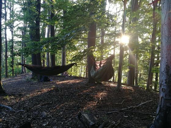 Overnighter im Sommerwald